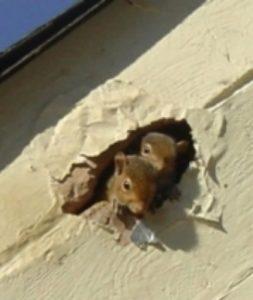 Miami - squirrels