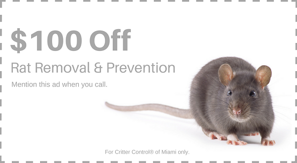 Save $100 on Rat Removal