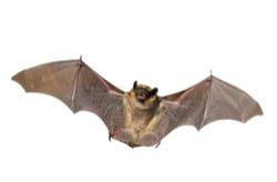 Miami Bat