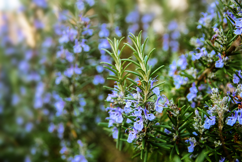 Can Plants Naturally Help Repel Animals